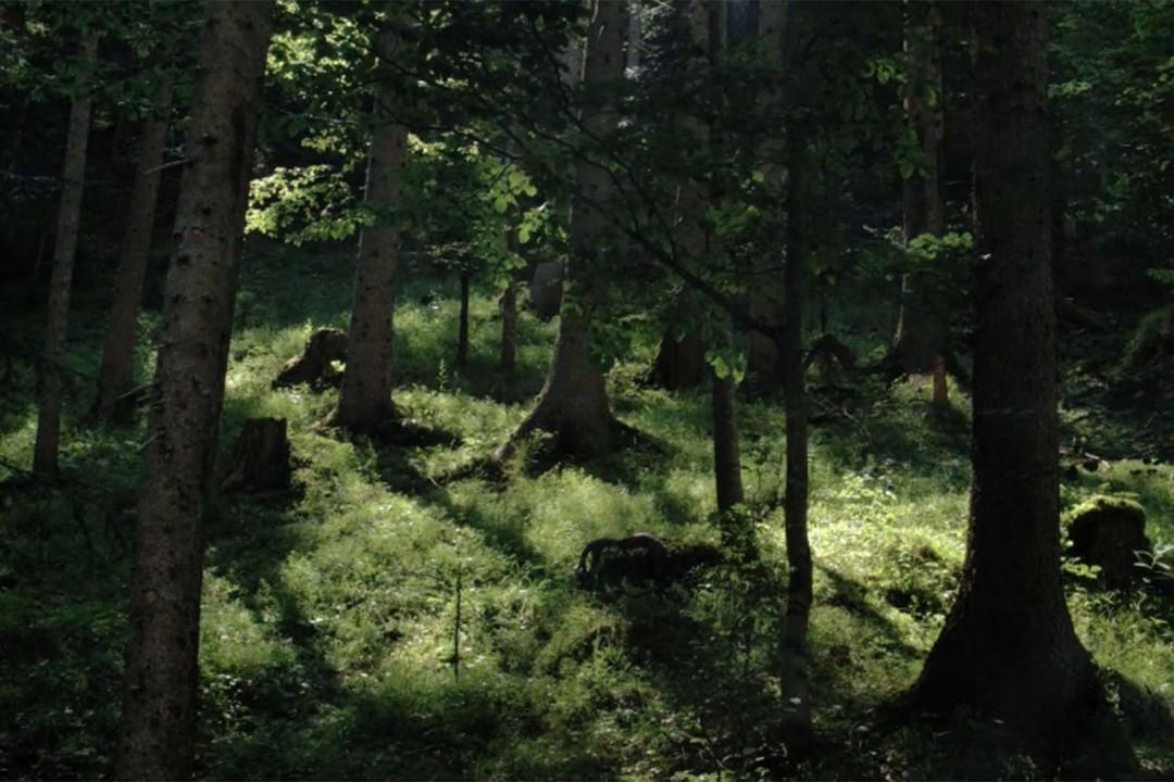 legno-possibilità-esistenza