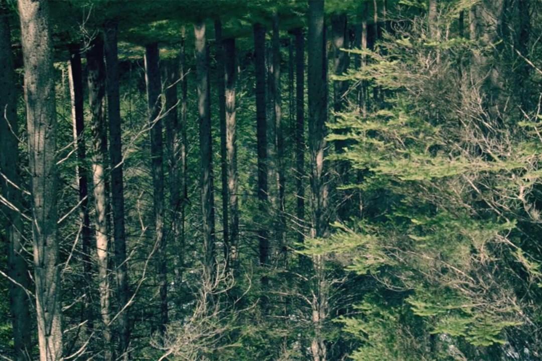 legno-possibilità-esistenza-4